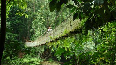 Spektakuläre Wege durchs Grün: Das Danum Valley ist ein Schutzgebiet in Sabah.