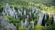 Pinnacles: die Kalksteinspitzen im Gunung-Mulu-Nationalpark im Norden von Sabah.