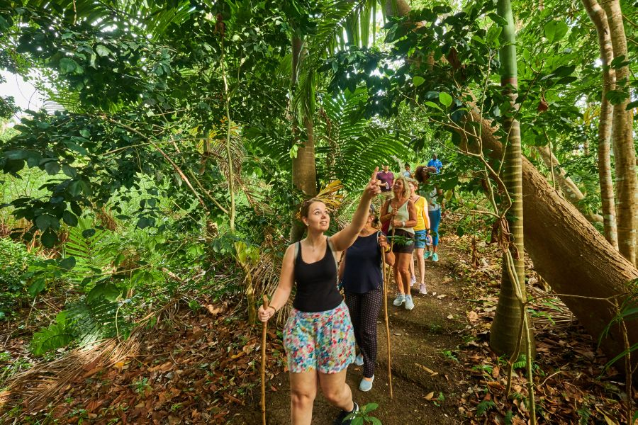 Travel agents discover the island's rainforest...