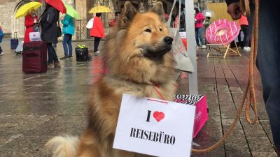 Auch dieser Hund zeigt Leidenschaft für Reisebüros.