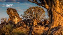 Das Lieblingsfoto von Ingrid Lutz, Laubacher Reisebüro, zeigt Köcherbäume bei Keetmanshop in Namibia.