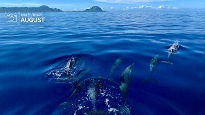 Stefanie Kamphaus aus Dinklage hat das Foto auf einer Bootstour an der Westküste von Mauritius geschossen. Der Bootsfahrer kannte sich gut aus, so dass die mobile Reiseberaterin einen Delfinschwarm bestaunen konnte.