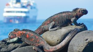 celebrity-expedition_galapagos_1500